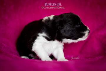 Purple girl - 11 days old