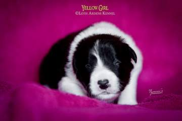 Yellow girl - 11 days old