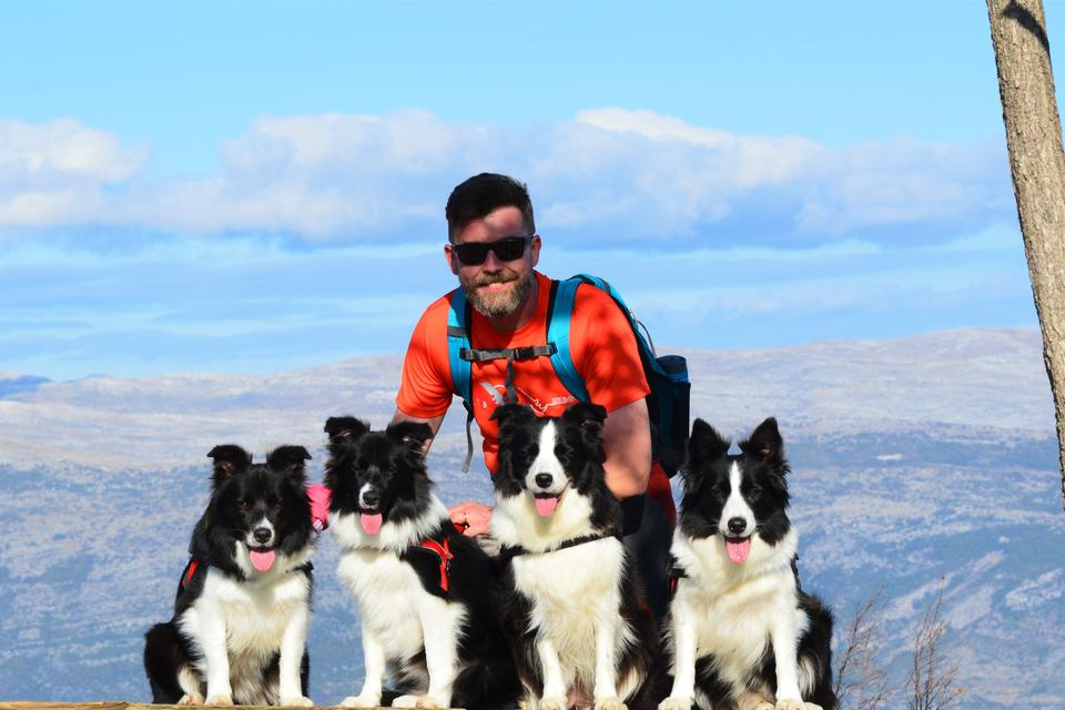 Border Collies in a mountains hiking trail