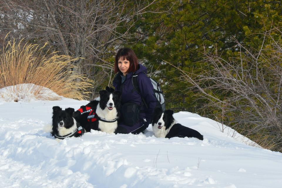 Border Collies in a snow